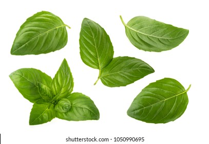 Basil leaves isolated on white background