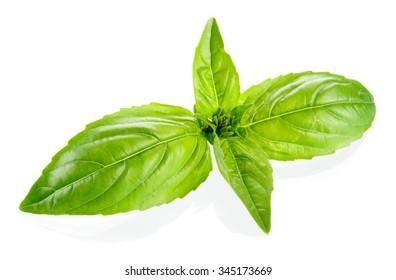 Basil leaves isolated on white background