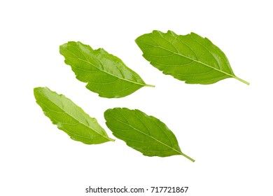 Basil leaves isolated on white background. Top view.