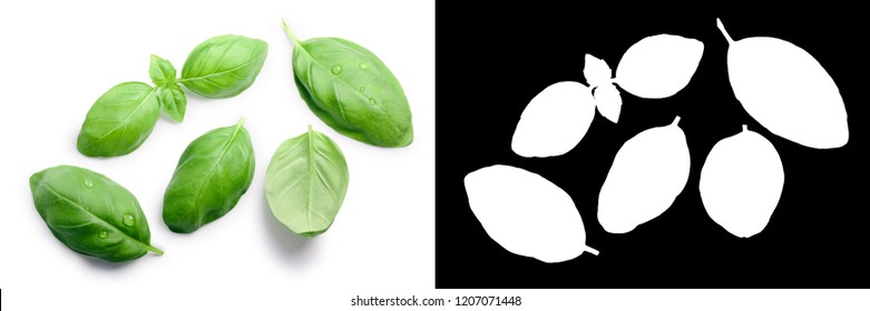 Basil leaves (Ocimum basilicum), top view. Clipping paths, shadows separated
