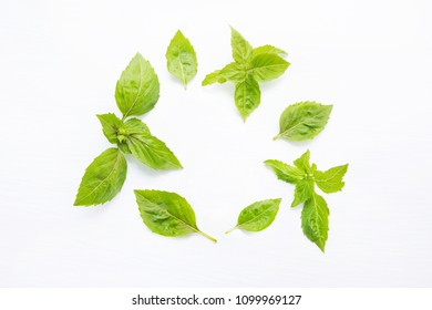 Basil leaves on white  blackground. Copy space