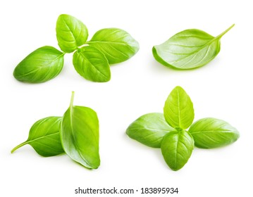 Basil leaves spice closeup isolated on white background.