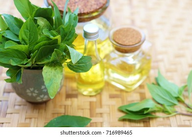 basil oil with basil