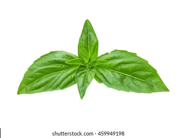 basil on a white background isolate