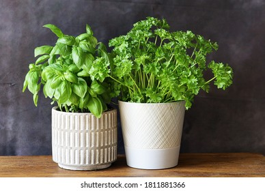 A basil  and a parsley plant in a white ceramic vase on an oak table top with a dark background