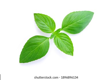 basil plant isolated on white background , top view , flat lay.