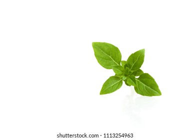 Basil is a plant like seasoning in cooking. Treatment for beriberi is with the help of medicinal herbs.