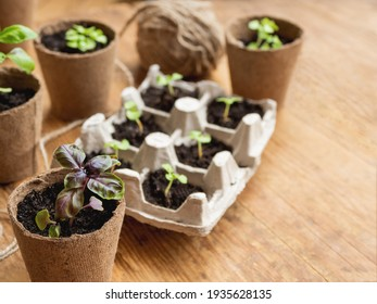 Basil seedlings in biodegradable pots on wooden table. Green plants in peat pots and seeds. Reuse of egg cartons. Copy space.