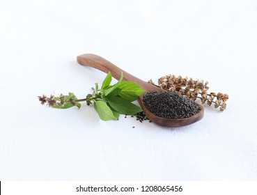 Basil seeds, also known as sabja seeds, are a healthy food, leaves and dry stalk, on a wooden spoon.
