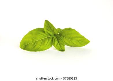 basil twig isolated on white background