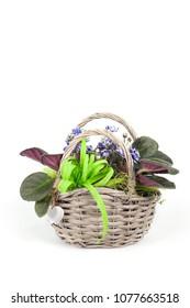basket with African violets