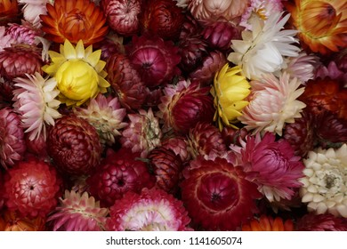 basket of blooms for sale at an Astoria, Oregon Sunday market