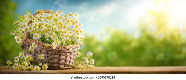 Basket of chamomile flower on wooden table