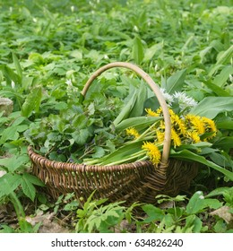 Basket with collected wild herbs in the forest