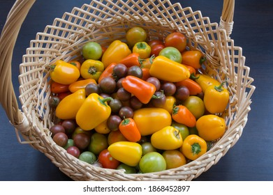 Basket with colorful vegetables. There are yellow and orange bell peppers, green and red and dark tomatoes in a wicker basket. Fresh harvest from the garden