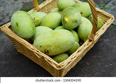 Basket of common pawpaw fruit (asimina triloba), also called custard apple