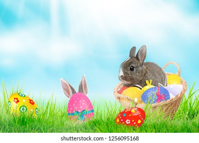 Basket of easter eggs and rabbit on green grass at sunny day.