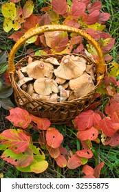Basket of edible fungi.