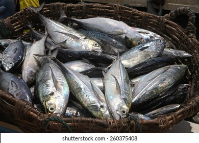 A basket of fishes just caught