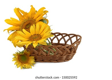 basket and flower sunflower on a white background
