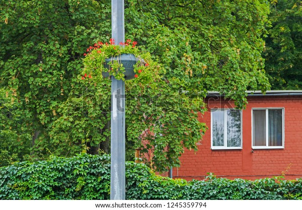 Basket of flowers hanging on a lamppost against the backdrop of lush green vegetation and a small brick cottage