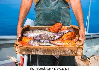 Ein Korb mit frischen Fischen, auf einem Fischerboot, Kreta, Griechenland.