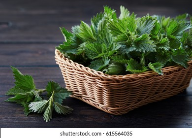 Basket of fresh stinging nettle leaves on wooden table
