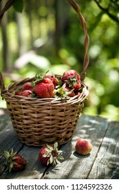 Basket of fresh strawberry on rustic table. Outdoors shot with natural light