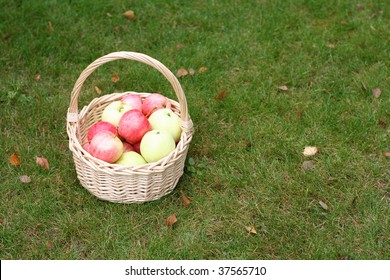 basket with fresh sweet apples on green grass