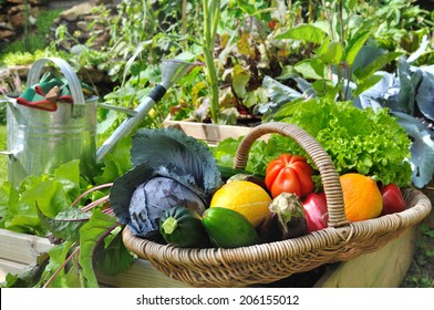 basket of fresh vegetables in a placed vegetable garden