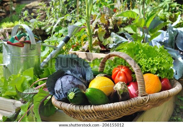 basket of fresh vegetables in a placed vegetable garden