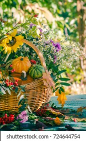A basket full of autumn harvest in the garden: pumpkin fruits and colorful flowers