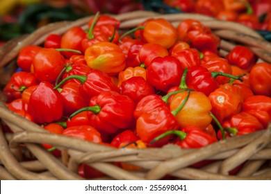 Basket full of fine grown habanero pepper