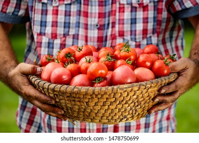 A basket full of red tomatoes held in man's hands.