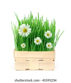 Basket with green grass and daisies