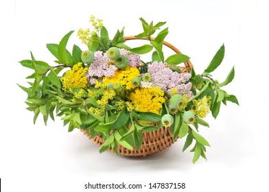 Basket with herbal tea plants