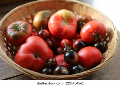 A basket of homegrown organic tomatoes, made of green, red and black varieties