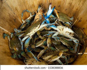 A basket of just caught Maryland blue crabs.