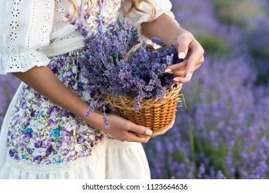 Basket with lavender flowers in woman hands. Aromatherapy.  Woman collect lavender.