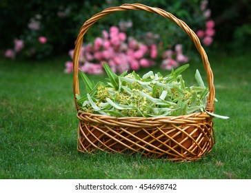 basket with linden flowers on grass in the garden