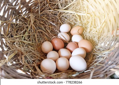 Basket with lots of fresh chicken eggs form hen house in the organic farm,Fresh eggs from hen house for raw material cooking