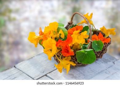 basket of Nasturtium plant with yellow and orange flowers,