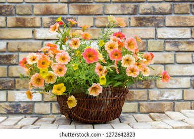 basket with petunias (Petunia hybrida) flowers on brick wall
