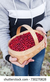 Basket with ripe red lingonberries in the hands of a girl