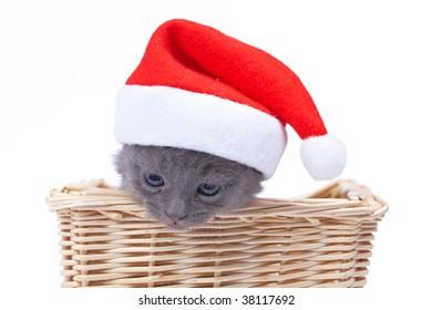 Basket with santa kitten inside isolated on white background