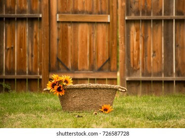 basket with sunflower with wooden fence