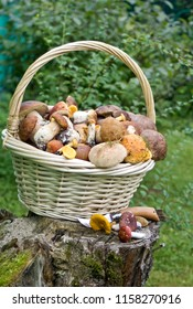 Basket with variety of raw mushrooms on old stump