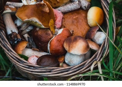 basket with various edible mushrooms close up in autumn