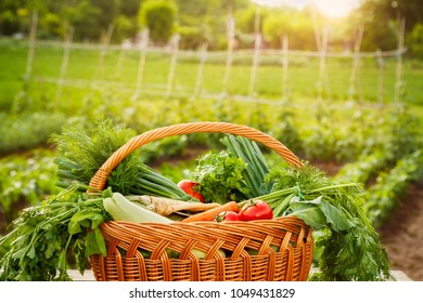 Basket with vegetable.Full basket with organic vegetable.