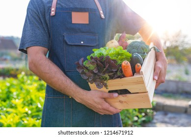 Basket with vegetables (cabbage, carrots, cucumbers, radish and peppers) in the hands of a farmer background of nature Concept of biological, bio products, bio ecology, grown by yourself, vegetarians.